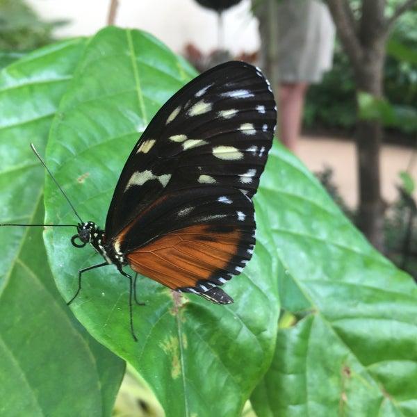 Photo taken at Hershey Gardens by John D. on 8/4/2016