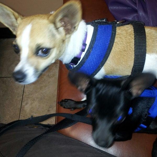 vca el mirage animal hospital   veterinarian