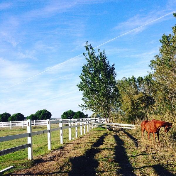 10/4/2015 tarihinde Gamze K.ziyaretçi tarafından Olimpos At Çiftliği'de çekilen fotoğraf