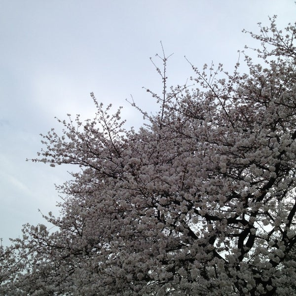 Photo taken at Shinjuku Gyoen by 藤本 拓. on 3/24/2013