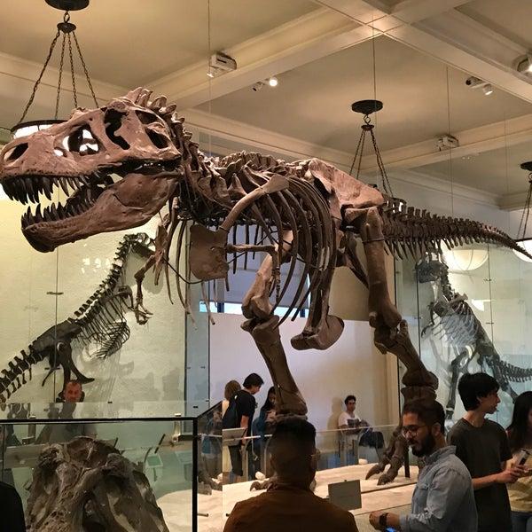 Photo taken at David H. Koch Dinosaur Wing by Jan N. on 9/16/2017