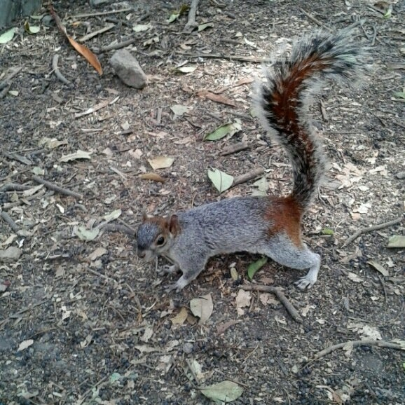 Photo taken at Bosque de Chapultepec by Yana G. on 2/18/2013