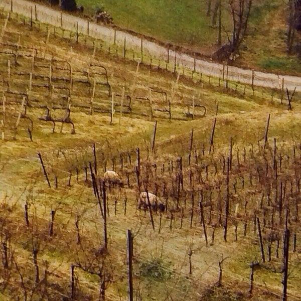"""Foto scattata a Polisena """"L'altro Agriturismo"""" da Alex B. il 12/29/2013"""