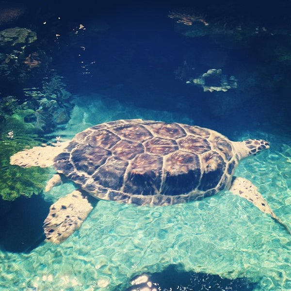 Photo taken at National Aquarium by Todd W. on 7/28/2013