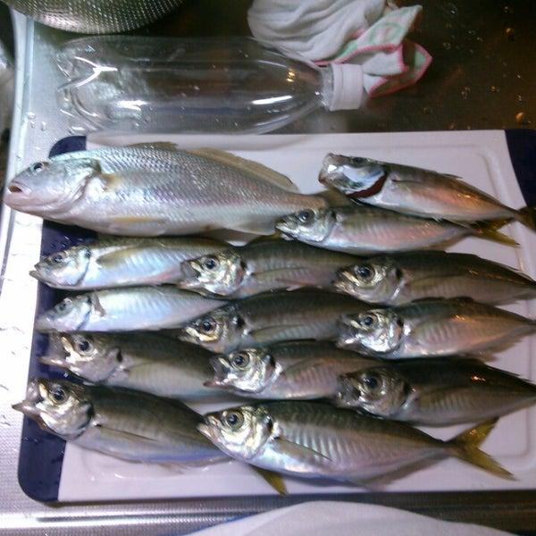 6/1/2013に小太り お.が金沢八景 忠彦丸 釣船・釣宿で撮った写真