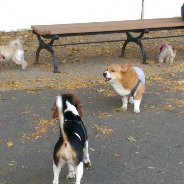 Sherry Park Dog Run