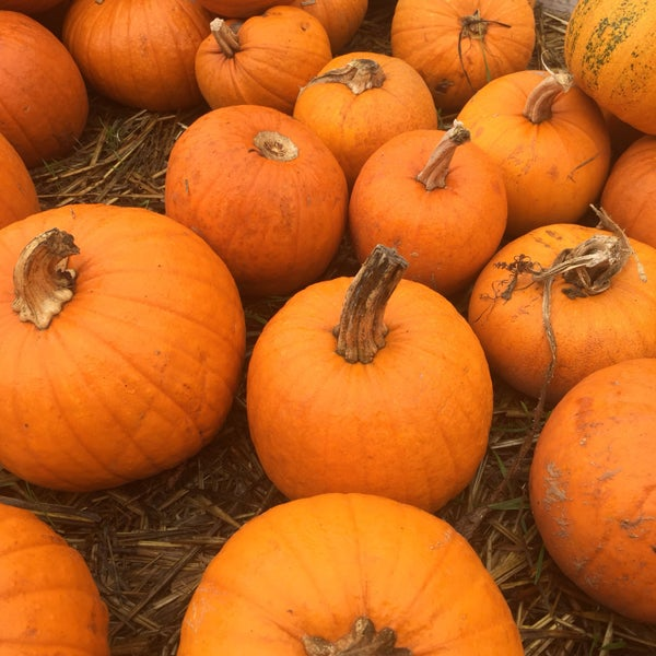 Photo taken at Clancy's Pumpkin Patch by Jeff R. on 10/29/2016