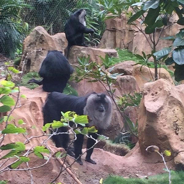 Photo taken at Maharajah Jungle Trek by Kevin J. on 12/11/2016