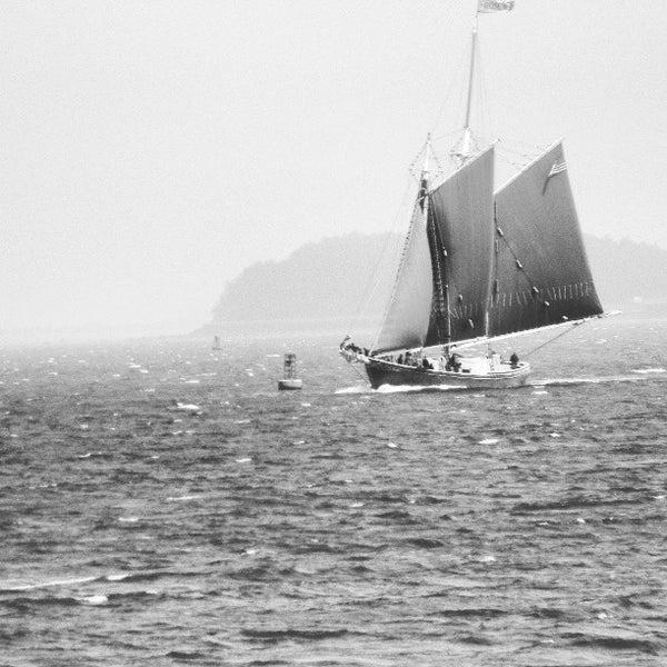 5/30/2013 tarihinde Krissy D.ziyaretçi tarafından Castle Island'de çekilen fotoğraf
