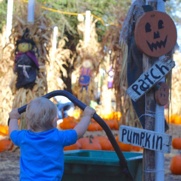 Photo taken at Clancy's Pumpkin Patch by Kelly I. on 10/7/2015