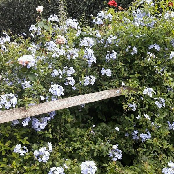 Foto scattata a agriturismo stella blu banditella 2 n 14 da Rita F. il 10/6/2016