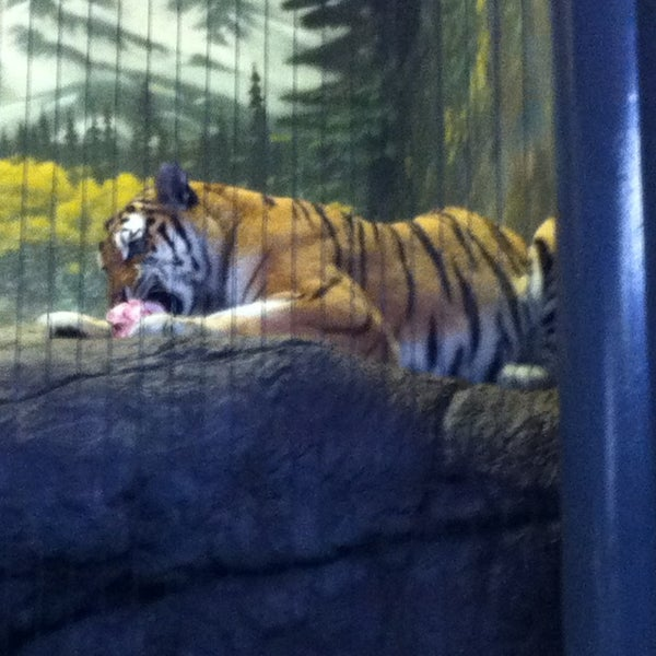 Photo taken at Lincoln Park Zoo by Don C. on 7/3/2013