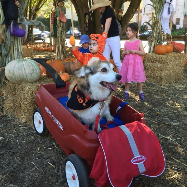 Photo taken at Clancy's Pumpkin Patch by Susannah S. on 10/9/2016
