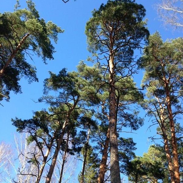 Photo taken at Dzintaru mežaparks by Sergej M. on 4/21/2013