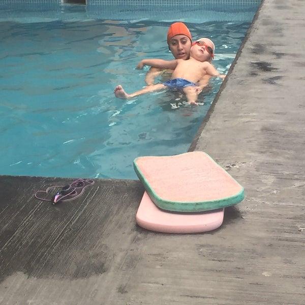 Club de nataci n anfibios piscina for Piscina de natacion