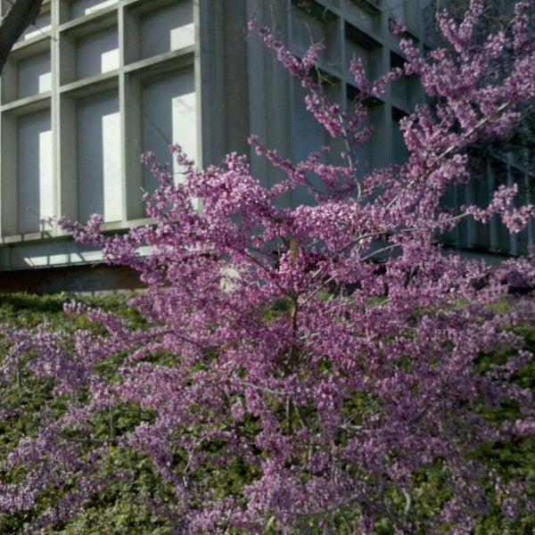 Photo taken at American River College by Scott C. on 3/18/2013