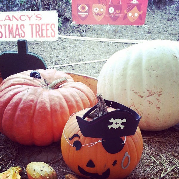 Photo taken at Clancy's Pumpkin Patch by Peter C. on 10/30/2014