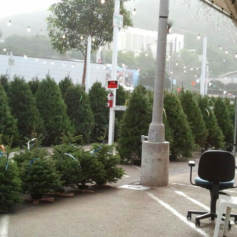 photos at pinery christmas trees now closed garden center in - Pinery Christmas Trees