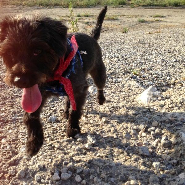 Alice frost kennedy dog park dog run in far east pasadena solutioingenieria Gallery