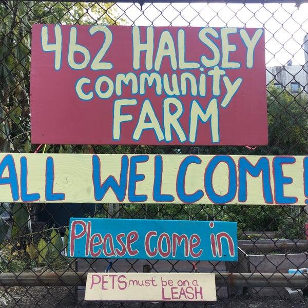 photo taken at 462 halsey community garden by eva w on 116 - Halsey Garden