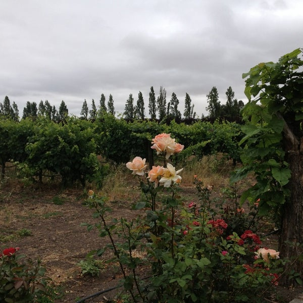 Photo taken at Cline Cellars by Patricia M. on 6/10/2013