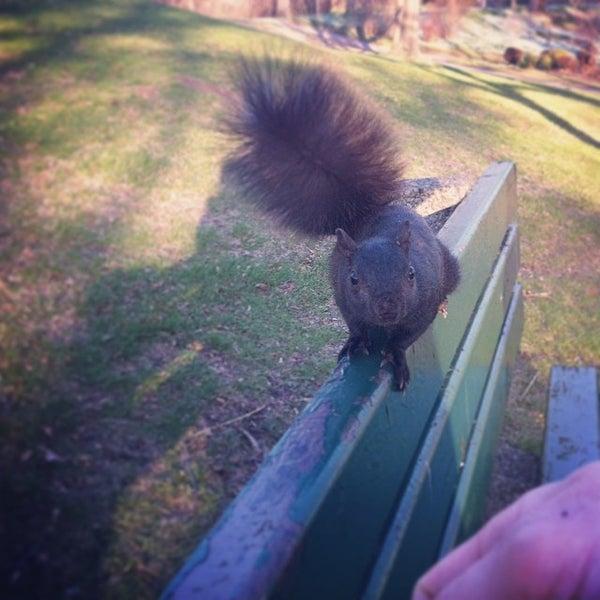 5/11/2014 tarihinde Angie T.ziyaretçi tarafından High Park'de çekilen fotoğraf