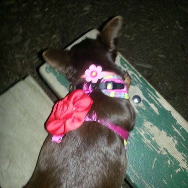Photo taken at Cunningham Park Dog Run by JoyBella on 6/16/2013