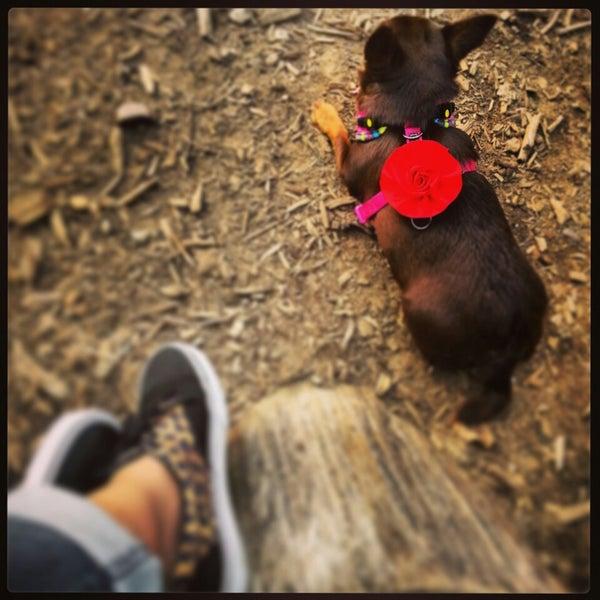 Photo taken at Cunningham Park Dog Run by JoyBella on 7/2/2013