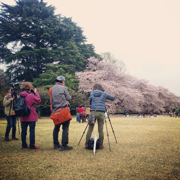 Photo taken at Shinjuku Gyoen by Igor L. on 3/31/2013