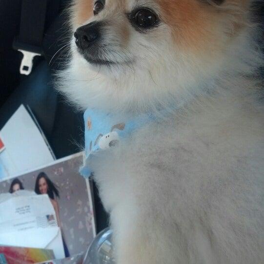 Dippity do dog 4 tips solutioingenieria Choice Image