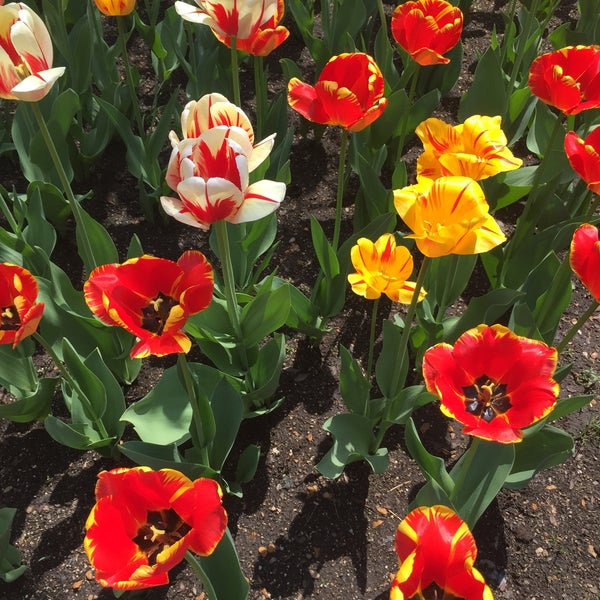Photo taken at Cantigny Park by Will H. on 5/6/2015