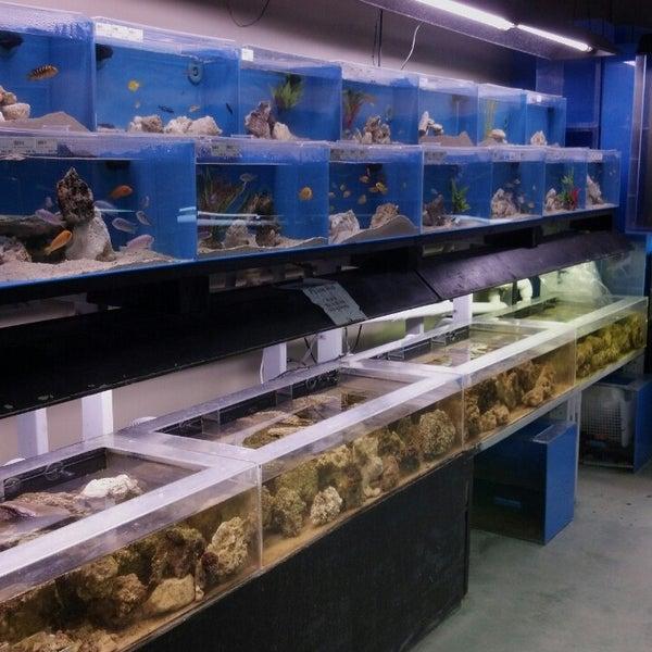 Optimum aquarium 3 tips for Fish store austin