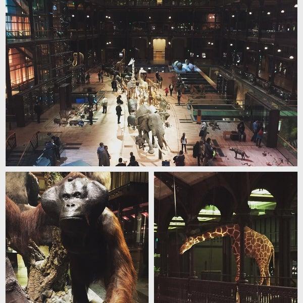 Grand amphitheatre du museum national d 39 histoire naturelle college auditorium in jardin des - College du jardin des plantes ...
