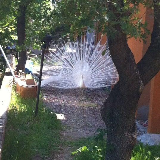 4/21/2012 tarihinde Tanyel Y.ziyaretçi tarafından Club Albena Otel'de çekilen fotoğraf
