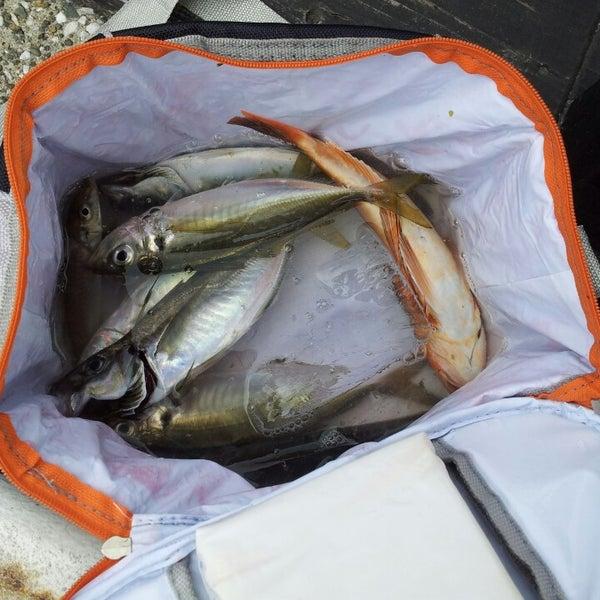 8/5/2013にゆず こ.が金沢八景 忠彦丸 釣船・釣宿で撮った写真