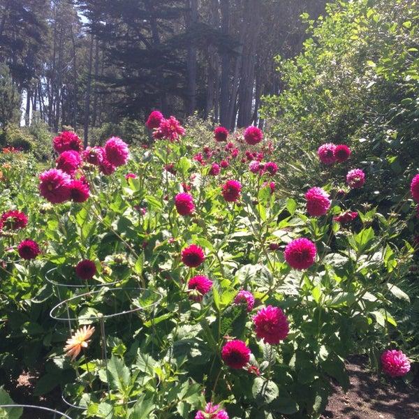 Mendocino Coast Botanical Gardens Garden In Fort Bragg