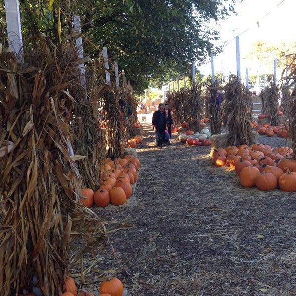 Photo taken at Clancy's Pumpkin Patch by Neil K. on 10/12/2014