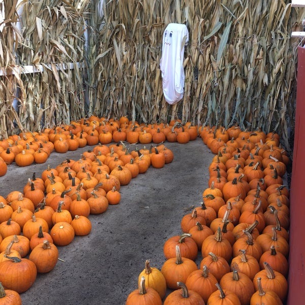 Photo taken at Clancy's Pumpkin Patch by Kathryn B. on 10/21/2017