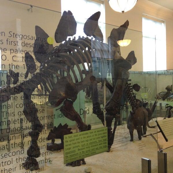 Photo taken at David H. Koch Dinosaur Wing by Jennifer on 5/26/2013