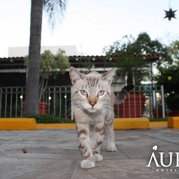 ¡Visita el mejor hotel Pet Friendly de la zona!