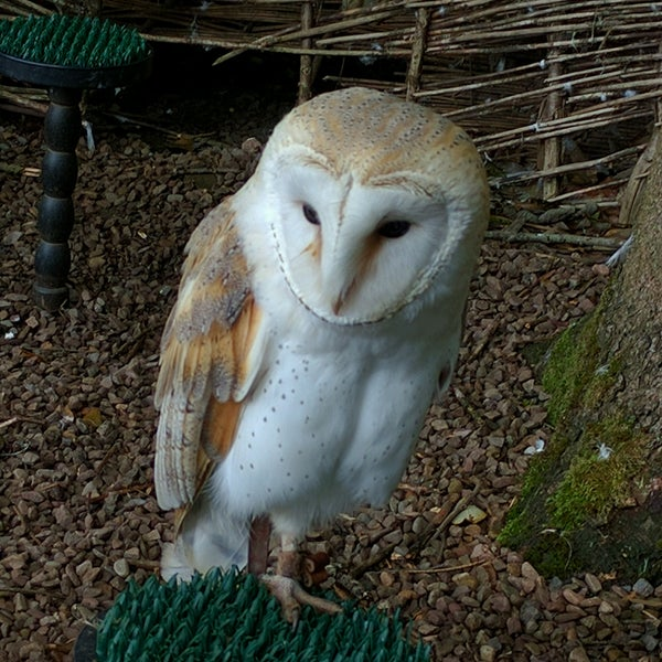 Photo Taken At Dalhousie Castle Falconry Centre By Greg B On 9 4