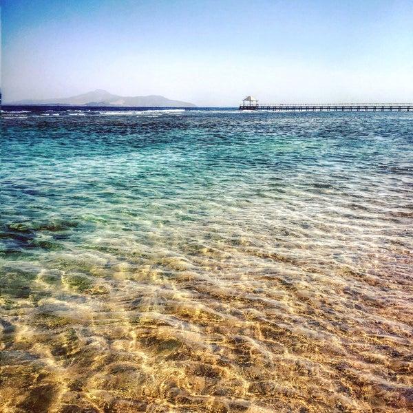 """В общем и в целом - отель понравился, риф тоже. Но кажд.день в первой половине дня - красный флаг для купания с понтона... ходили плавать в """"лагунку"""" (по пляжу справа)"""