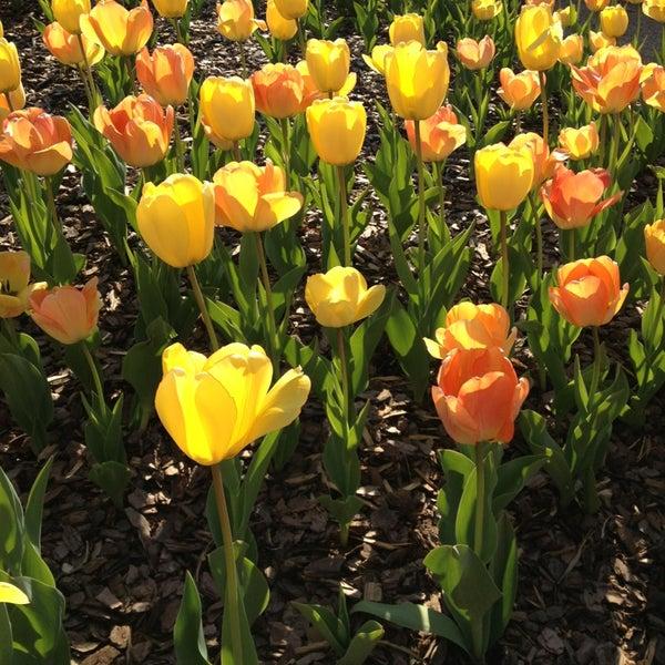 Photo taken at Atlanta Botanical Garden by Carol B. on 3/28/2013