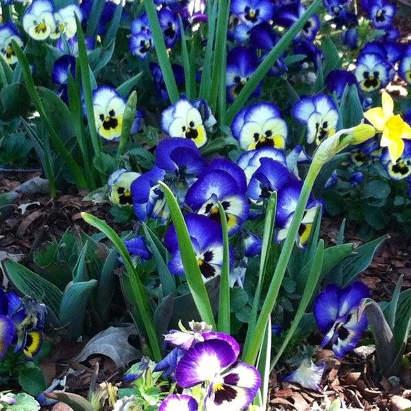 Foto tirada no(a) Dallas Arboretum and Botanical Garden por Steph M. em 3/3/2013