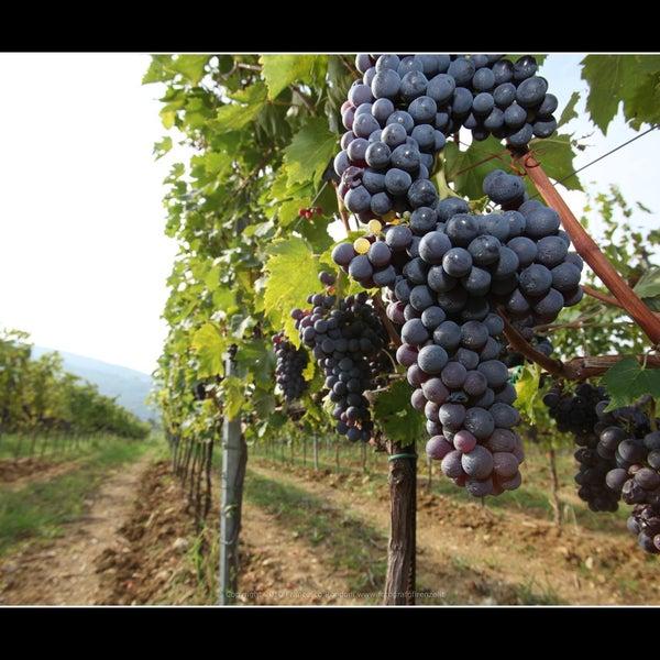 Foto tomada en Fattoria di Poggiopiano por Fattoria di Poggiopiano el 9/20/2013