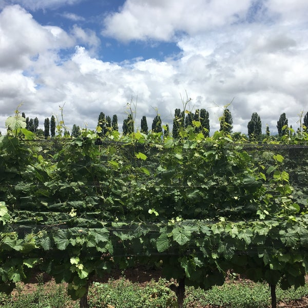 Photo taken at Dominio del Plata Winery by Caro G. on 12/3/2017