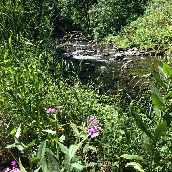 Photo taken at Wahclella Falls Trail by Daniel K. on 6/14/2015