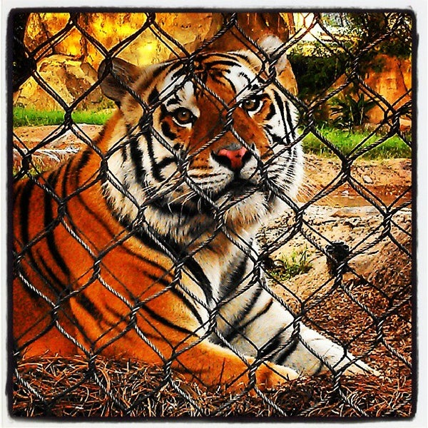 Photo taken at LSU - Mike's Habitat by Theresa O. on 9/27/2013