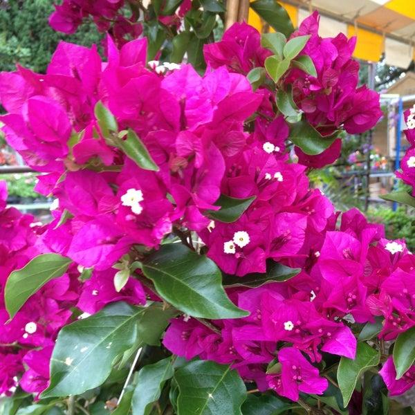 Photos At Cedar Grove Gardens Garden Center In Dorchester