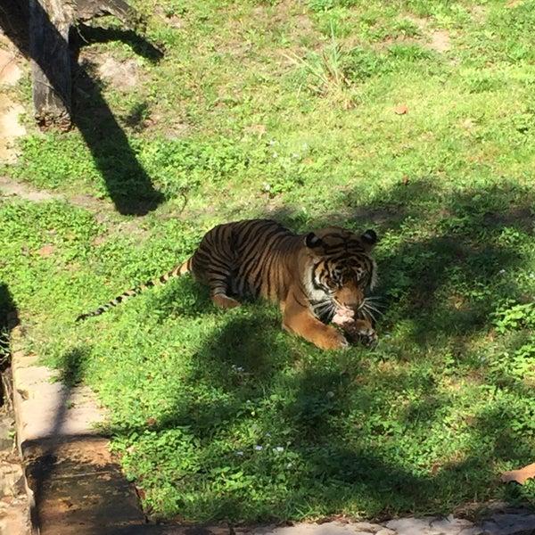 Photo taken at Maharajah Jungle Trek by Lucas A. on 12/28/2016